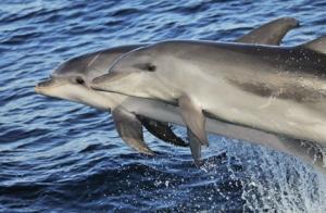 ¡Últimas plazas! Avistamiento de cetáceos para 2